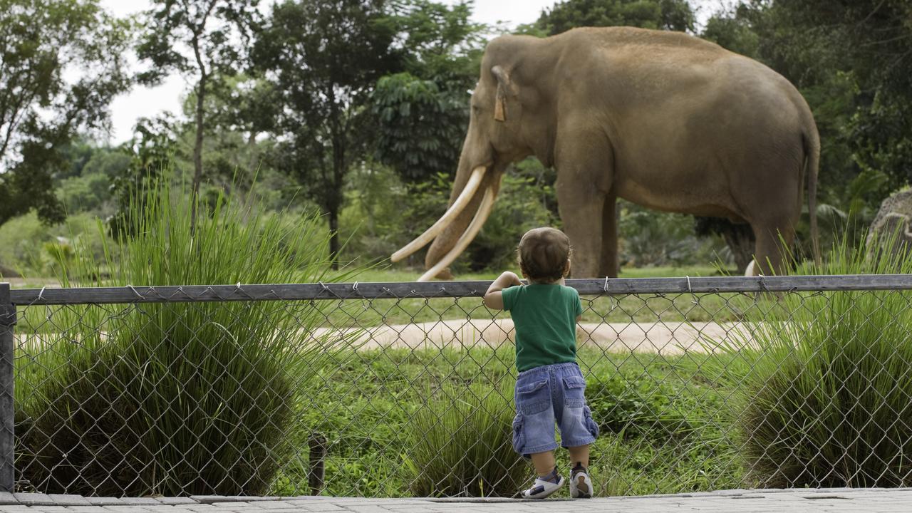 Elephants won't be in captivity in the UK.