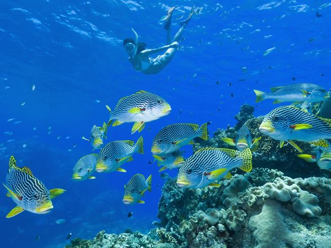 GREAT BARRIER REEF, FOUR-NIGHT TROPICAL TRIP, $499 Cruise the Great Barrier Reef and save up to $600 per cabin with Flight Centre. Now priced from $499 a person for an interior stateroom, from $599 for an oceanview stateroom and from $639 for a balcony stateroom, this deal includes a four-night cruise departing Brisbane on Carnival Spirit with a call at Airlie Beach and all main meals and entertainment on board. This offer is valid for sale until February 27, 2020 and departs February 21, 2021. flightcentre.com.au
