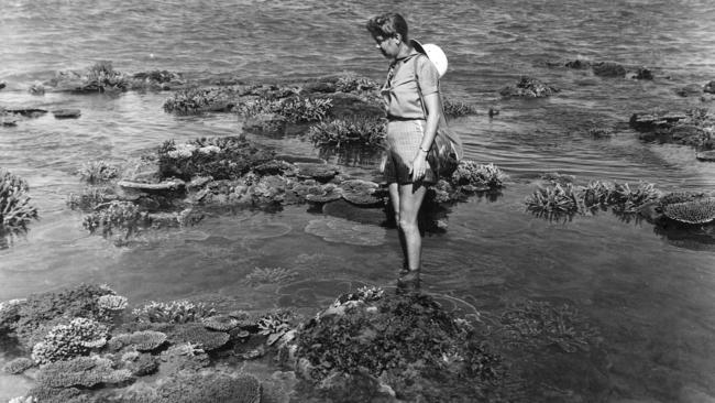 In this image released today, Karen Middleton views coral on what was locally known as Coral Gardens, opposite the old Sugar Wharf in Dickson Inlet, Port Douglas.