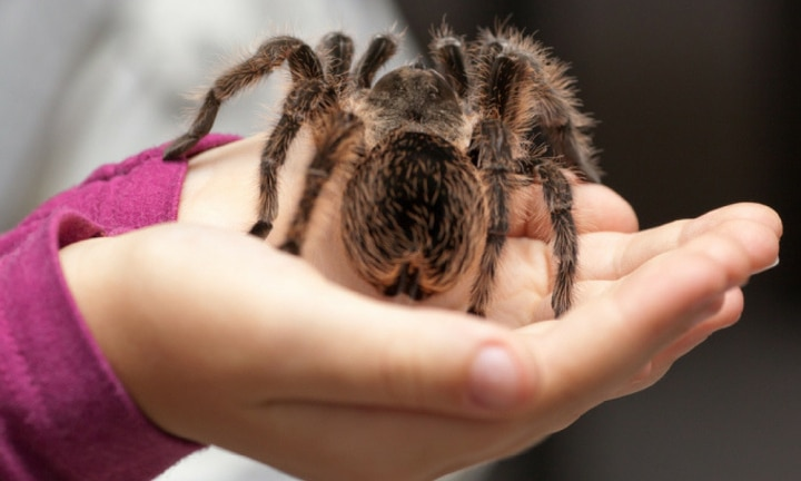 "<b>MAKE YOUR SKIN CRAWL …</b>  <p>""My baby ate a huge huntsman spider. It was missing a few legs by the time I caught him playing with it, hugely gross! Freaked me right out. I was too scared to get the spider out of his hand.""</p>"