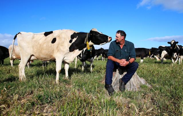 13/11/2015 Fourth-Generation dairy farmer Mark Billing interacts with a cow on his property near Colac, 150km south west of Melbourne. Mark supplies milk to Fonterra, which is making significant investments in the infant formula market. While he's cautionously optimistic about the role of China for the industry he says farmers are still waiting to see the benefits of the supposed formula boom.