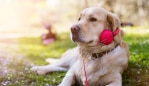 Spotify launches Pet Playlists