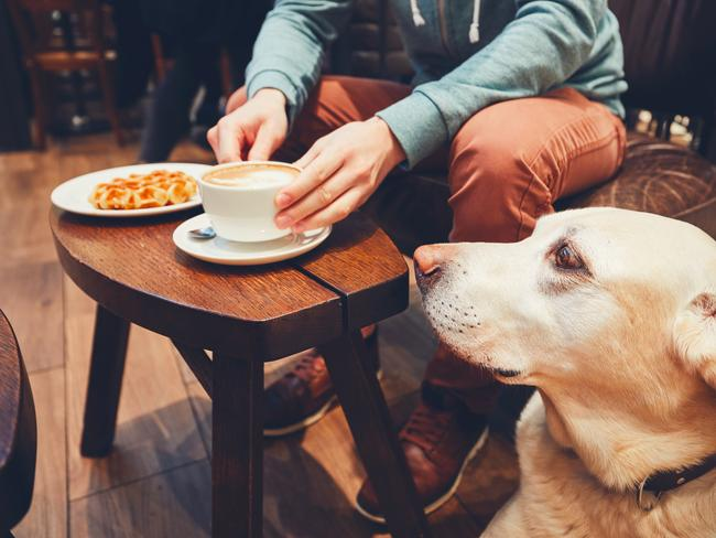 CAFES THAT ALLOW DOGS Dog owners in Europe can bring their pooches to breakfast, the pub and even inside certain shops, and that's how it should be.