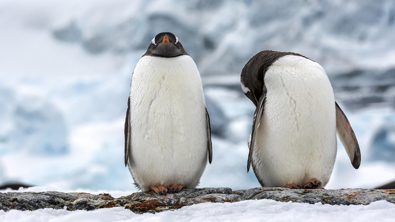Hike to a penguin rookery with top-of-the-range Chimu Adventures Antarctica. Picture: Gianluca Lombardi