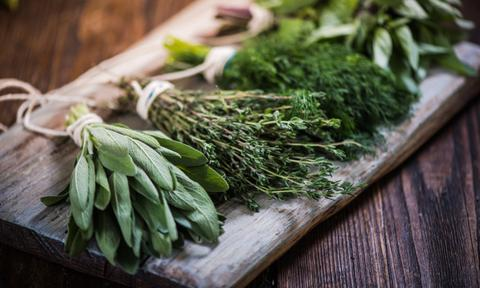 <b>HERBS</b><p> Many believe storing fresh herbs in the fridge will keep them fresher and give them a longer shelf life. Actual fact is that they can wilt quicker and lose their fresh taste. You're best filling up a cup of water and letting them sit pretty in the kitchen, picking as you need. If you're lucky, you could even sprout some roots and plant it in a small pot!</p>