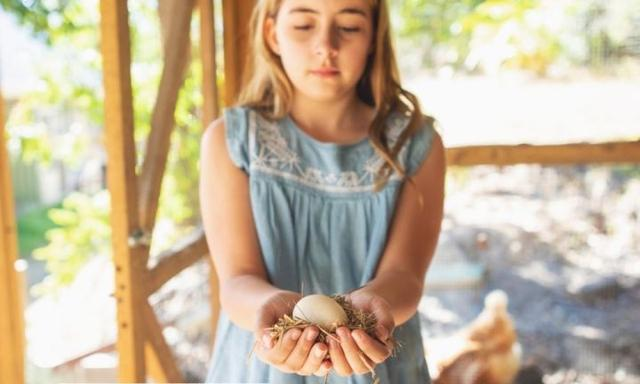 what you need to know about getting chickens for a family pet