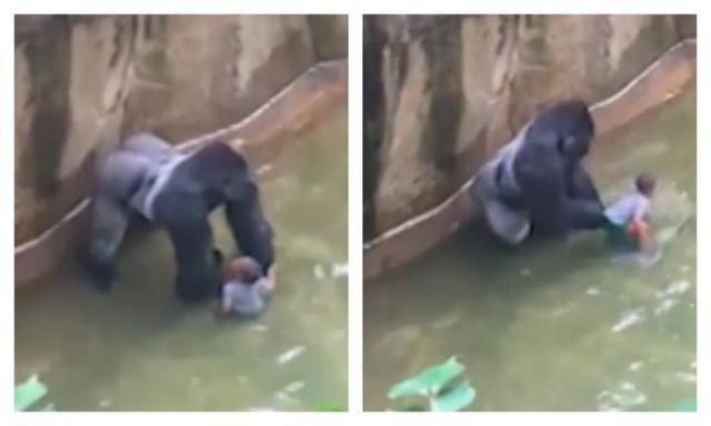 Family of boy who fell into enclosure face backlash over gorilla's 'senseless murder'