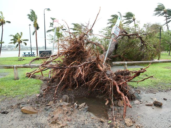 An uprooted tree on the beachfront at Airlie Beach which has been battered by 230km/hour winds Photographer: Liam Kidston