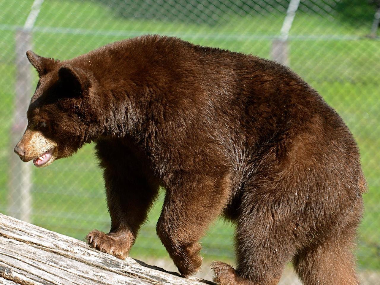ESCAPE: ZooAmerica in Hershey Pennsylvania. Picture: ZooAmerica/Facebook