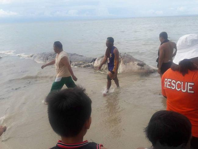 The sea-beast was found in the shallows off Maasin City in the Philippines. Picture: Facebook/Nujnuj Capistrano