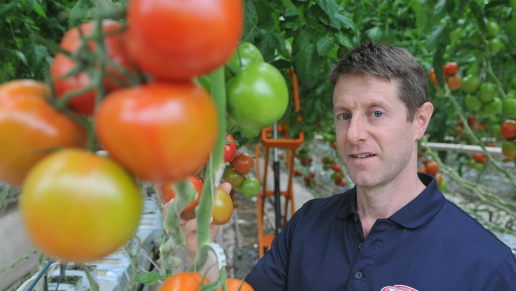 Flavorite Glasshouse Tomatoes: Warragul business grows for it | The