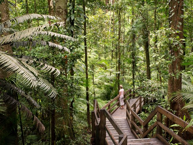 DAINTREE RAINFOREST One of North Queensland's must-see attractions is the world heritage listed Daintree Rainforest. Not only is it home to the world's most diverse range of fauna and flora, but it offers a truly incredible opportunity to explore Australia's outdoors.
