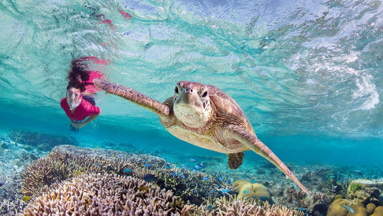 Swimming with a turtle at Lady Elliot Island on the Great Barrier Reef. Picture: Tourism and Events Queensland
