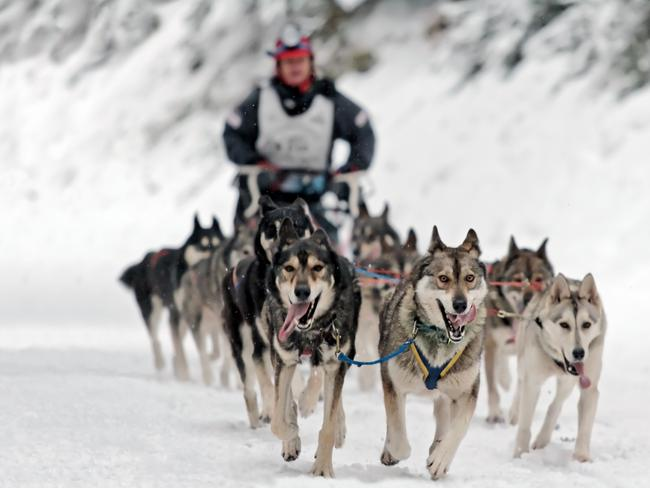 EXPLORE THE BACKCOUNTRY Nothing says Canada more than the pitter-patter of fluffy husky paws on the snow. Experience a once-in-a-lifetime dog-sledding tour in the beautiful backyard of Banff National Park. With packages from 30 minutes to four hours, there's options for all budgets. But if you're going all out, you can't miss the helicopter and sled tour including a 25-minute flight over the majestic Sundance Range.  HOW TO RIDE THE POWDER HIGHWAY