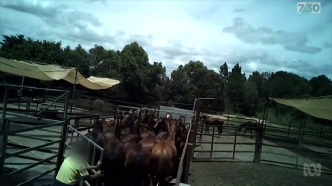Racehorses sent to their death (7:30 Report)