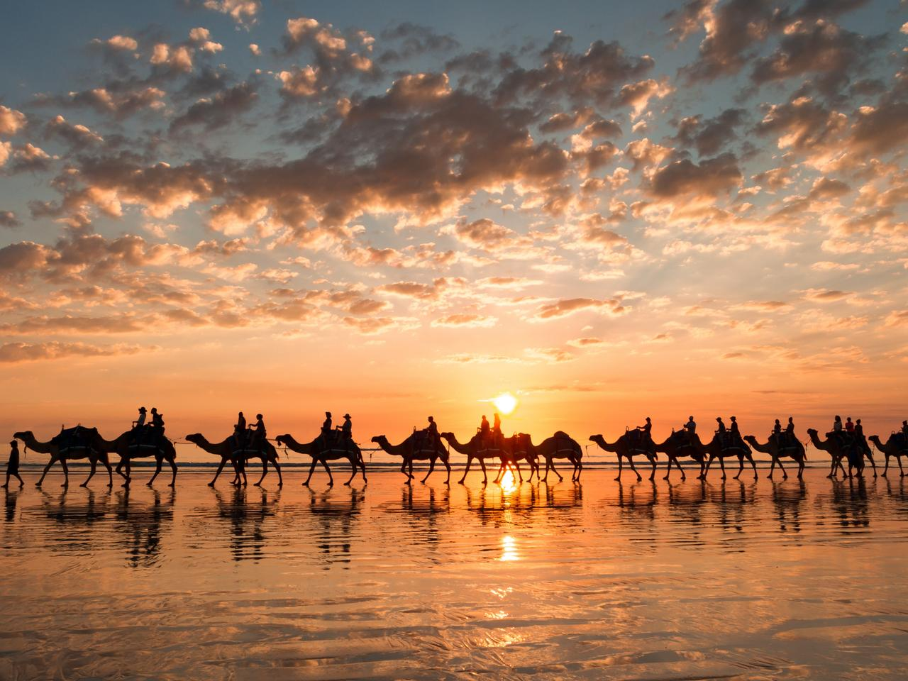 Sunset silhouette of the camels on Cable Beach, Broome, Western Australia.
