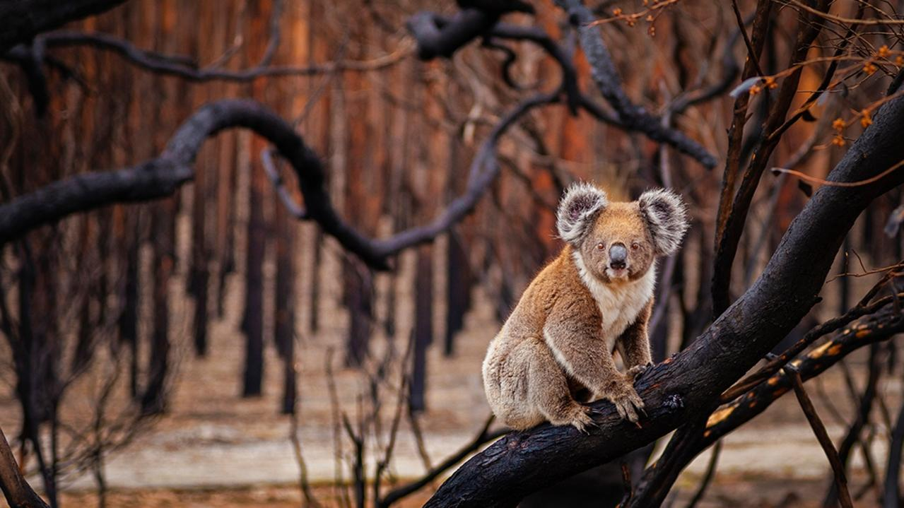 """Resilience"", shot on Kangaroo Island, SA, in 2018 is a finalist in the 2019 BigPicture Natural World Photography Competition. Picture: Julie Fletcher"