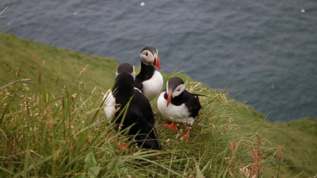 It's home to adorable puffins who come here to breed.Picture: Lynn Fae/Unsplash