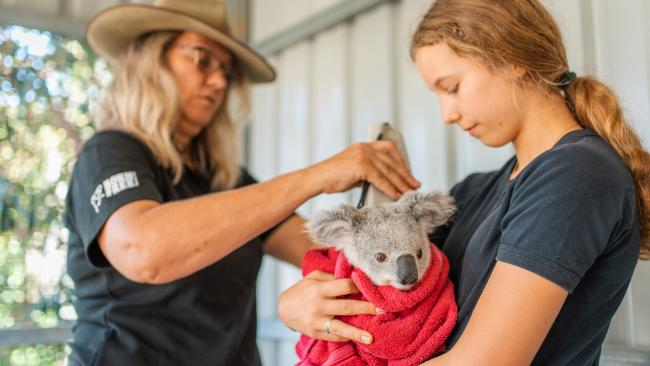 Koala release on Magnetic Island, Queensland with Izzy (and mum Ali Bee) from the Koala Hospital.