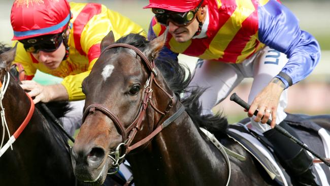 Pierata is a firm favourite for the Magic Millions Guineas on Saturday week. Picture: Mark Evans