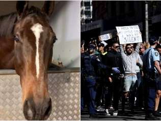 The horse, Tobruk, is safe and uninjured. Picture: Mounted Unit - NSW Police Force / Getty Images