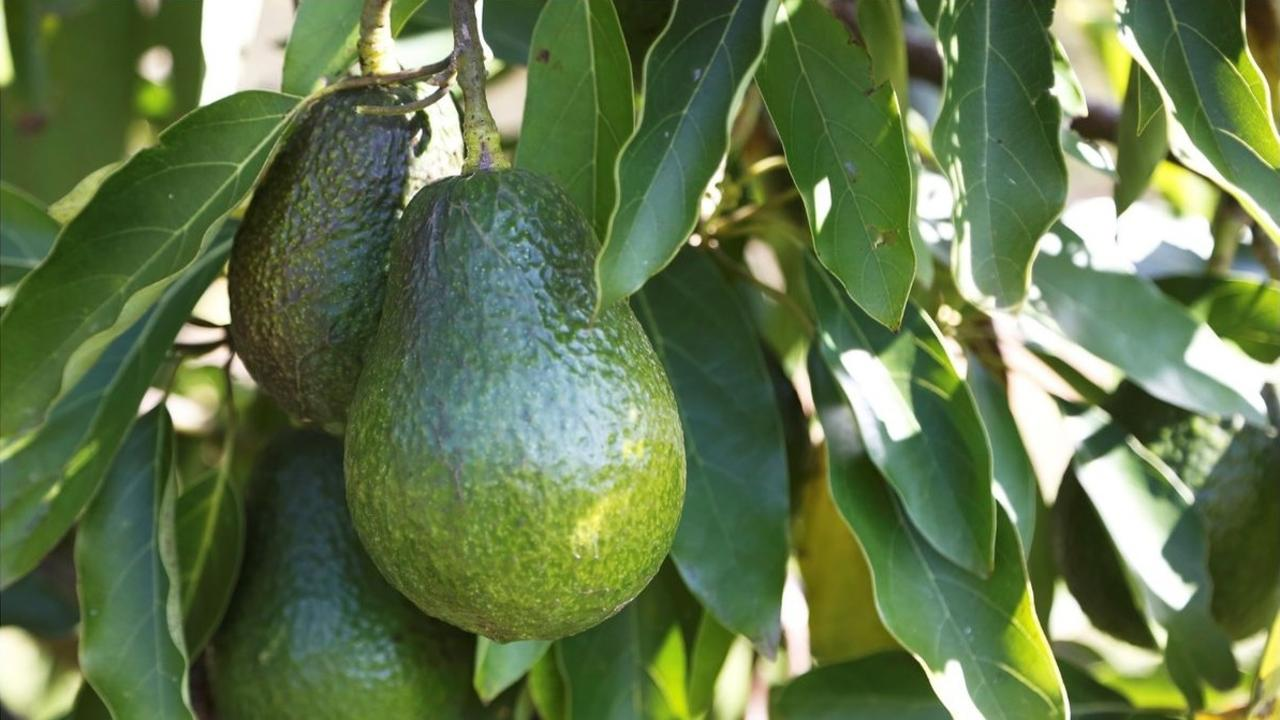 Millennial's will love this farm with all the avocados on offer.
