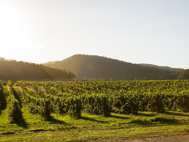 KING VALLEY Often likened to the rolling hills of Italy, rich in bountiful wine and hearty produce, King Valley isn't far off. Set among the vineyards, the valley is renowned for its quality of food, and not just that, but activities too; horse riding, camping, fishing, hiking, 4WD tours, water holes and a brewery (if you can call drinking an activity…). Accommodation options are available too for all budgets. King Valley is three hours northeast of Melbourne. Picture: Visit Victoria / Josie Withers