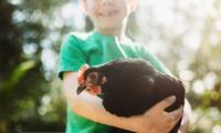 Everything you need to know about getting backyard chickens