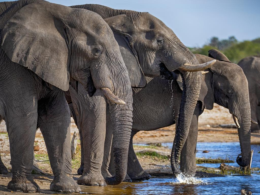right in the middle of an elephant herd, Botswana