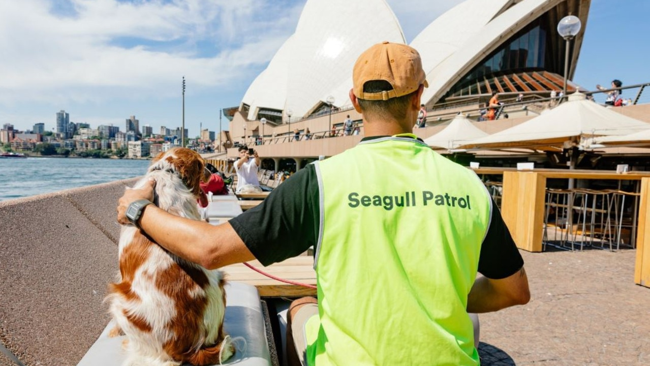 Sydney's most iconic harbourside building has enlisted the help of dogs to combat the seagull issue. Source: Sydney Opera House