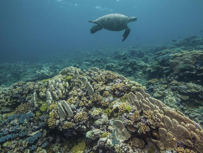 ... But you're likely to have a chance to say g'day to at least a few of the 40,000-100,000 turtles that visit each year while you're in the water. Mike Ball Dive's seven-night Turtle Spectacular dive expedition (departing leaving November 11 and 25, 2019) visits Raine Island and several other sites. mikeball.com. Picture: Mike Ball Dive Expeditions