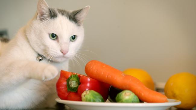 """""""Pussi"""" is a Queensland vegan cat owned by Jessica Martella from Brighton. He is thriving on the diet, despite warnings by vets that cats should be eating meat."""