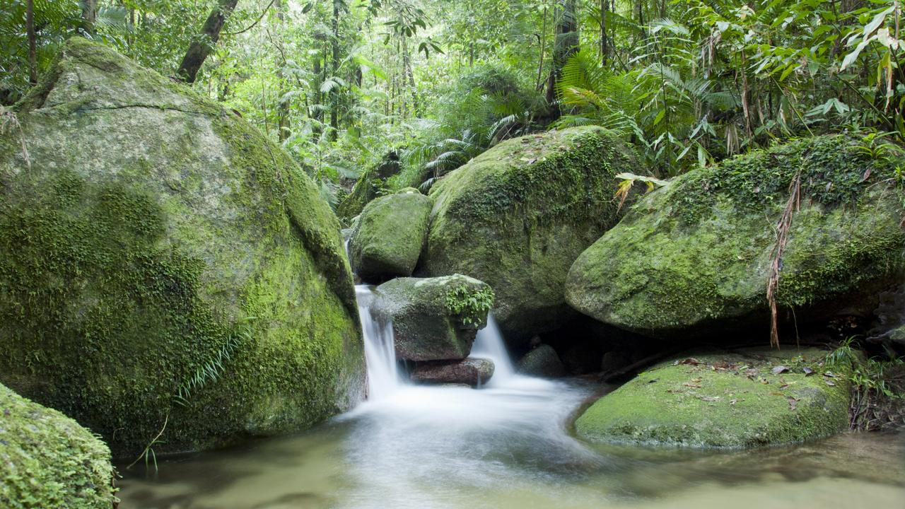 River in green jungle environment with rocks