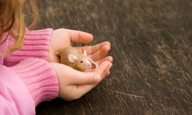 The best unusual pets for families